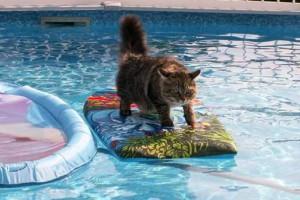 surfing_cat3